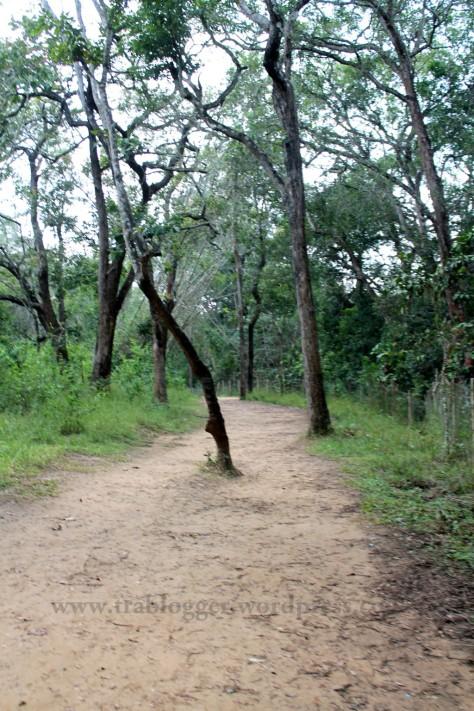 Nisargadhama coorg
