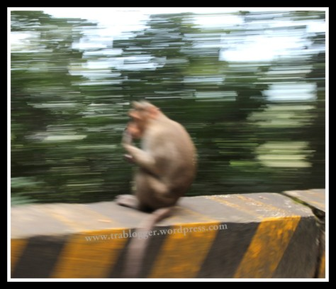 blur, photography tips, better photography, slow shutter speed
