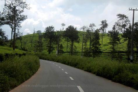 kerala tourism, edakkal, wayanad, tea estates