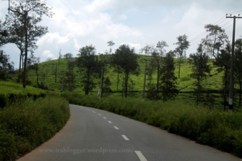 kerala tourism, edakkal, wayanad, tea estates