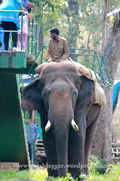 elephant ride, nisargadhama,coorg