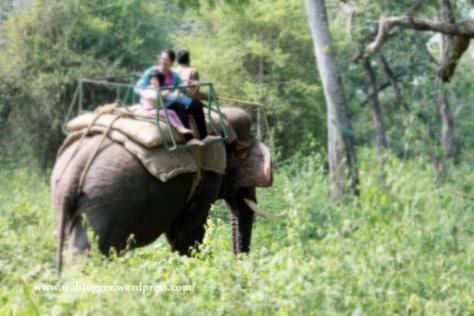 Elephant ride, nisargadhama, coorg