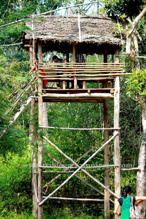 treetop bamboo cottage nisargadhama coorg