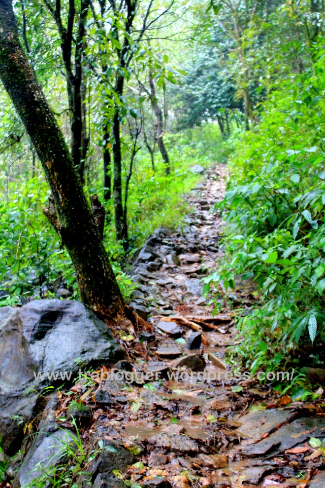 The Rocky path