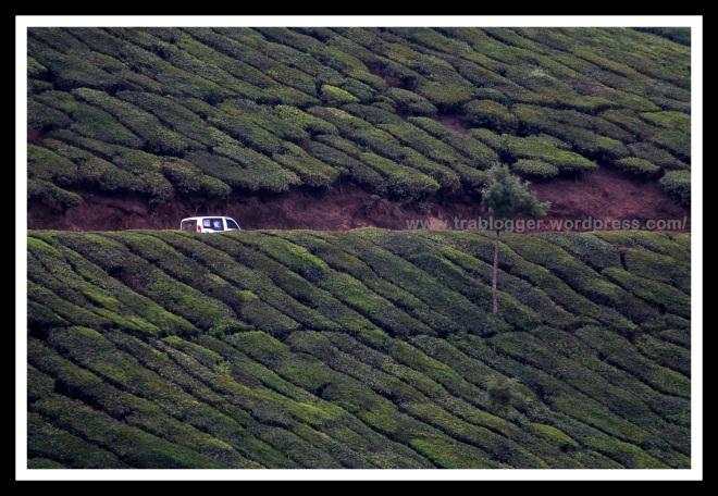 Driving through beautiful Munnar