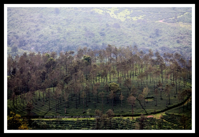 Birds eye view from Wayanad