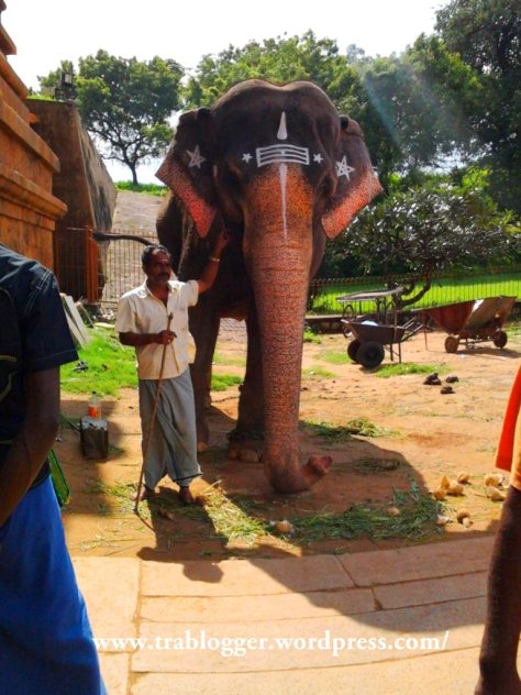 This elephant will bless you, if you pay the man standing next to it ;)