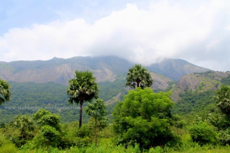 tamilnadu, train, palm trees, mountain, coimbatore