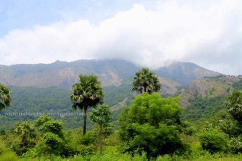 tamilnadu, train, palm trees, mountain, coimbatore