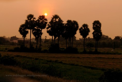 The morning Sun