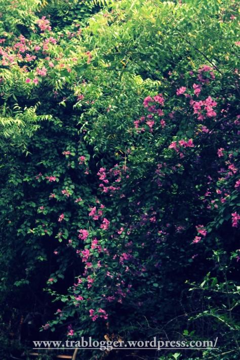 Beautiful Auroville