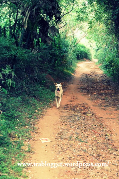 Wildlife photography at Auroville ;)