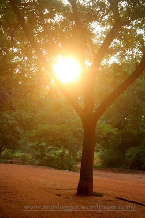 Just before chasing the Sunset in Auroville