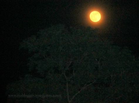 Moon picture that will not make you howl :p