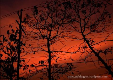 vermilion silhouette