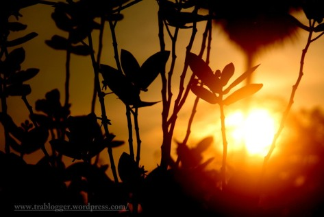 Warmth of a silhouette
