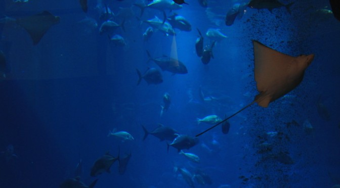 10 Pictures from the Under Water Zoo | Dubai Mall
