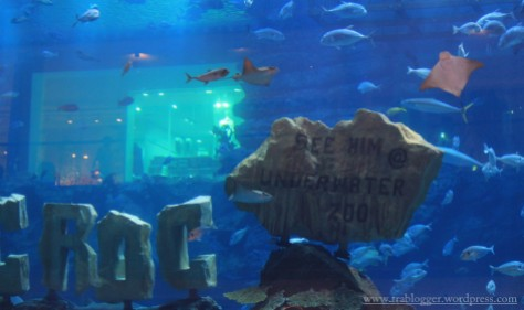 So if you want to see him @ the underwater zoo without the reflection