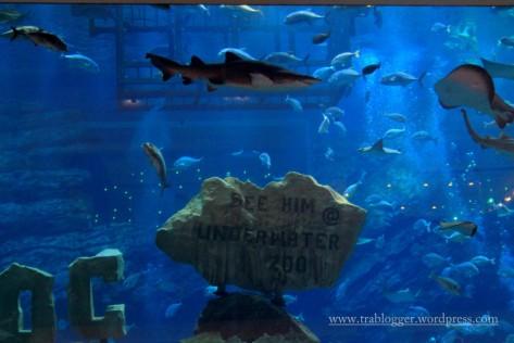 a few sharks ;)