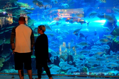 Where you can see the fishes