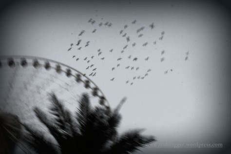And be like a free bird