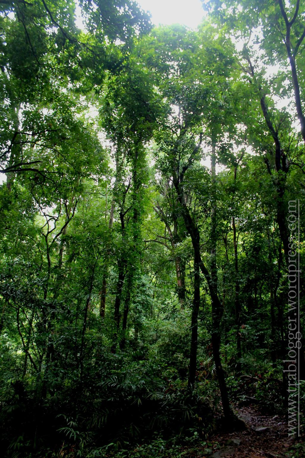 An authentic rainforest experience