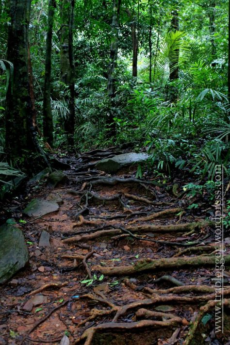 Steps made by Nature