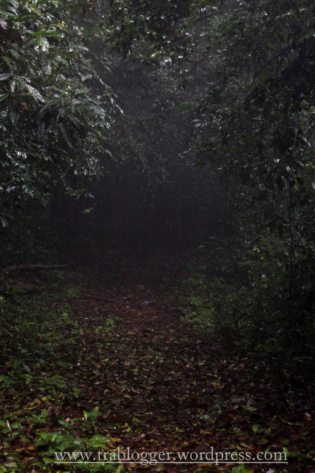 Much denser forest