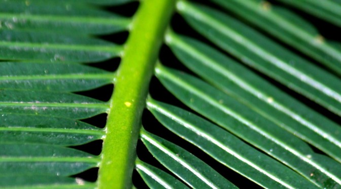 Up close and personal : Leaf