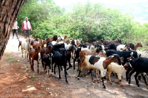 Through the village to Skandagiri